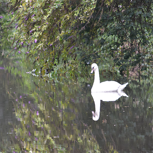 Wildlife on the Kennet and Avon canal